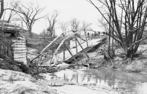 Hoggs Hollw Bridge Hazel Damage