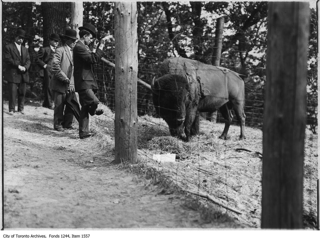 High Park zoo. - [1908?]